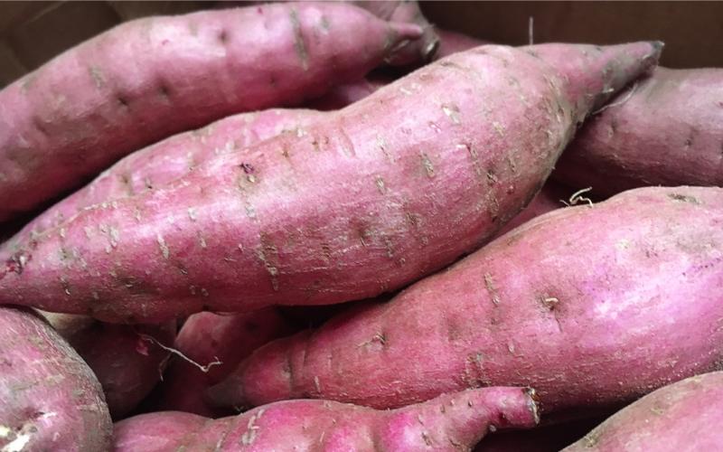 サツマイモの育て方
